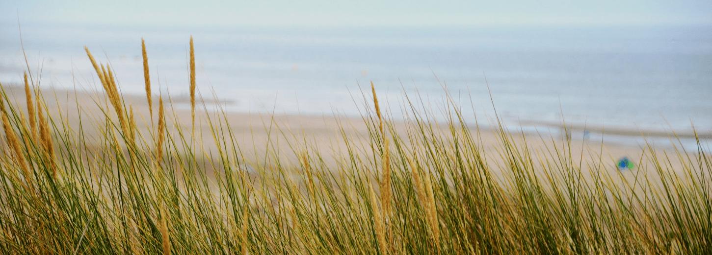 plage sainte cecile camiers proche immobilier neuf pour investissement locatif